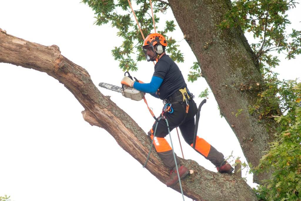 Tree Surgeon Kent